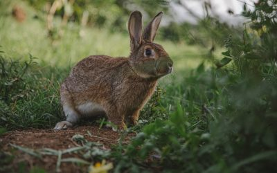 The Tortoise And The Hare And Its Application To Your Fitness Goal